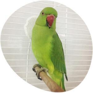 bird-in-hotel-ekb