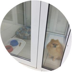 dog-in-hotel-ekb